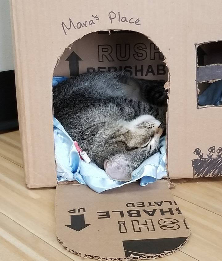 Indianapolis IN cat hospital